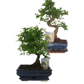 BONSAI MIX VASO CM. 15
