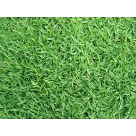 SEMI DI GRAMIGNONE PER PRATO CARPET GRASS GR. 500