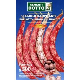 SEMI DI FAGIOLO BORLOTTO RAMPICANTE LINGUA DI FUOCO KG. 1