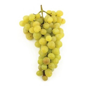 GRAPES ZIBIBO PLANT GRAFTED ON ROOTED CUTTING IN A POT