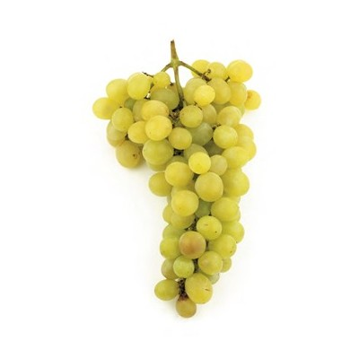GRAPES GRAFTED