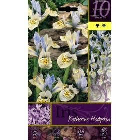 BULB FLOWER IRIS KATHERINE HODGEKIN No. 10