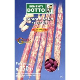 SEMI DI FAGIOLO NANO SALUGGIA GR. 250