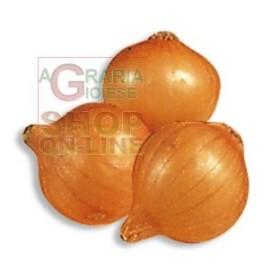 BULBS OF ONION PICKO BELLO MM. 14/21 KG. 0,500