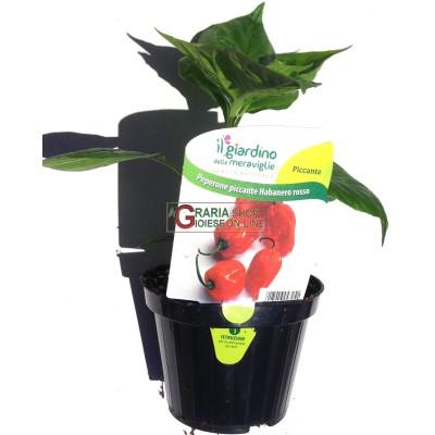 PLANTS HORTICOLES