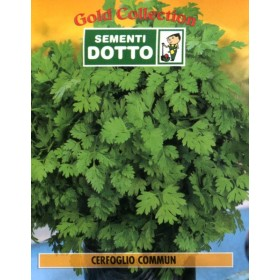 DUCT ENVELOPES THE SEEDS OF CHERVIL COMMUN